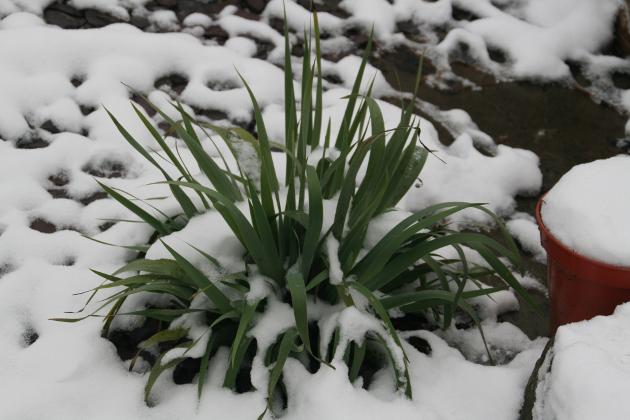 garden_snow