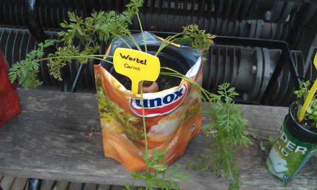 growing_carrots