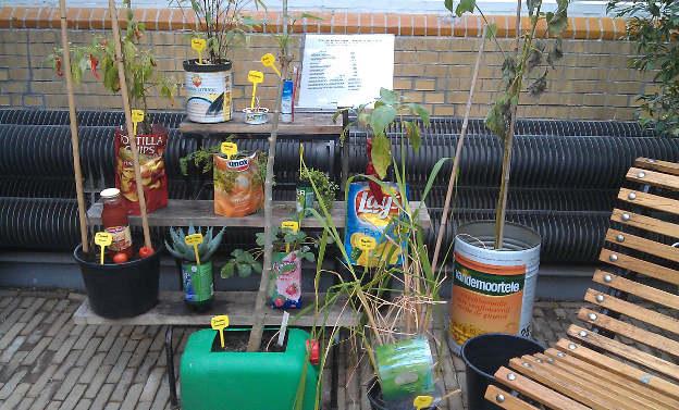 growing_food_3